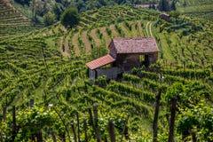 Proseccogebied, mening van heuvels met wijngaarden, zonnige dag royalty-vrije stock afbeeldingen