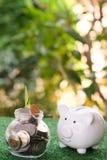 Prosiątko bank patrzeje na szkle który fulled pieniądze słój butelki pojęcia dolarowi pieniądze oszczędzania fotografia royalty free
