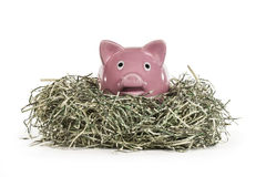 Prosiątko bank w Tartym dolara gniazdeczku Obraz Stock
