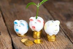 Prosiątko bank z drzewnym dorośnięciem od go R twój pieniądze Obrazy Royalty Free