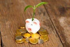 Prosiątko bank z drzewnym dorośnięciem od go R twój pieniądze Zdjęcia Stock