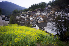 The Prospect of Jiangxi Wuyuan golden Rape Field. ,before Ching Ming Festival Royalty Free Stock Photos