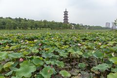 The prospect of the lotus pond-Nanchang Elephant Lake Wanshou pagoda. Pagoda is a common traditional Chinese architecture with special form and style in Asia stock photo