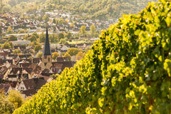 Prospect from a vineyard at the German village Geradstetten. Prospect from a vineyard with vines at the German village Geradstetten Stock Image