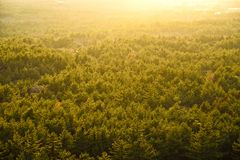 Prospect  of Yellow Forest with backlight. In Jeju Island Stock Photo