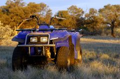 Prospection do rolamento do ouro no arbusto australiano Fotos de Stock Royalty Free