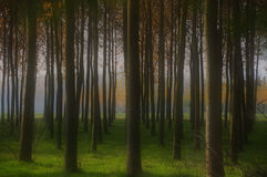Prospective. A forest seen like a fantasy Royalty Free Stock Photo