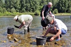 Prospectores del oro de todas las edades en los bancos del río de Gardon Fotos de archivo libres de regalías