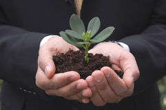 Prosper. Man wearing a suit holding a small plant stock photo