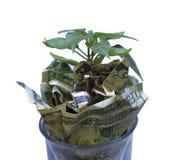 Prosperità e crescita di soldi su un fondo pulito Fotografie Stock Libere da Diritti