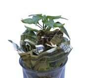 Prosperity and money growth on a clean background. A green seedling plant grows amidst dollar bills. Five dollar, twenty dollar, one dollar bills surround the royalty free stock photos