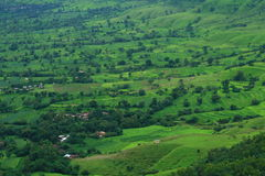 Prosperous Indian Farmland Landscape-II royalty free stock images