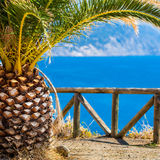 Prospettiva alla baia del mar Mediterraneo con la palma Immagine Stock Libera da Diritti