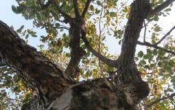 Prospettiva dell'albero Immagini Stock Libere da Diritti