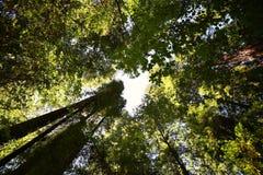 Prospettiva dell'albero Immagine Stock
