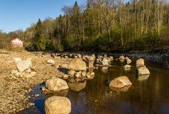 Prospettiva della rana del fiume di Tista Immagini Stock Libere da Diritti