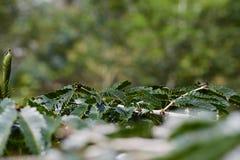 Prospettiva delle foglie di un albero immagini stock