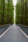 Prosta droga flankująca zielonymi drzewami w zielonym drogowym Linan, Zhejiang, Chiny zdjęcie stock