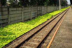 Prosta kolej dla dojeżdżający linii z zieloną krzak fotografią brać w Depok Indonezja Obrazy Stock