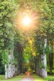 Prosta lasowa droga przemian z pięknymi sunrays Zdjęcia Stock