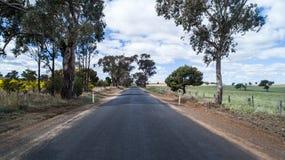 Prosta wiejska wiejska droga wykładał z eukaliptusowymi drzewami przy canola pola Obrazy Royalty Free