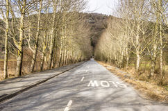 Prosta wiejska droga Wykładająca z drzewami Obraz Royalty Free