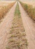 Prosta zarządzenie wiejska droga przez pszenicznego pola zdjęcia royalty free