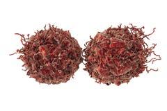 Prostate cancer cells. Isolated on white background, 3D illustration Stock Image