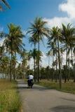 proste drzewa kokosowe przejażdżki Fotografia Royalty Free