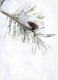 proste tła obraz redaguje charakteru zimy nosicieli kwiat mrożone Fotografia Stock