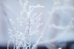 proste tła obraz redaguje charakteru zimy nosicieli Styczeń 33c krajobrazu Rosji zima ural temperatury alpy objętych domowej scen Obrazy Royalty Free