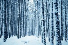 proste tła obraz redaguje charakteru zimy nosicieli Obrazy Royalty Free