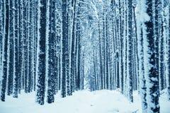 proste tła obraz redaguje charakteru zimy nosicieli Zdjęcie Stock