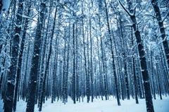 proste tła obraz redaguje charakteru zimy nosicieli Zdjęcia Stock