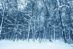 proste tła obraz redaguje charakteru zimy nosicieli Fotografia Royalty Free