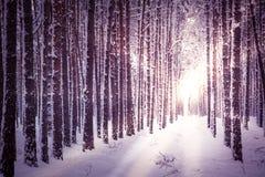 proste tła obraz redaguje charakteru zimy nosicieli Zdjęcie Royalty Free