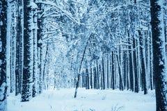 proste tła obraz redaguje charakteru zimy nosicieli Obraz Royalty Free