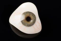 Prosthetic eller okulär protes för Glass öga på svart Arkivbild