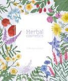 Prostokątna rama dekorująca z kwitnąć dzikich łąka kwiaty i kwiecenie zielne rośliny Elegancki dekoracyjny kwiecisty Fotografia Royalty Free