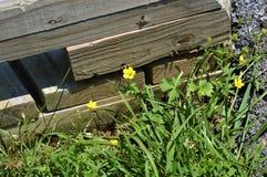 Prostokątni Drewniani promienie Obok Żółtych kwiatów i trawy fotografia stock