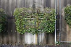 Prostokąta drzewo w Shizuoka, Japonia Obrazy Stock