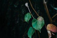 Prosty i skromny ulistnienie - rośliny tło fotografia royalty free