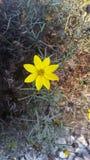 Prosty kwiat Zdjęcie Stock