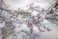 prosty piękno natura w zimie po opadu śniegu Zdjęcie Stock