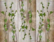 Prosty projekt, potomstwa zielenieje czereśniowe gałąź pojęcie ekologia fotografia royalty free