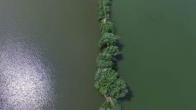 Prosty trzcinowy łóżko z drzewami w Dnipro rzece w lecie zbiory