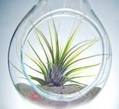 Rośliny terrarium Zdjęcia Stock