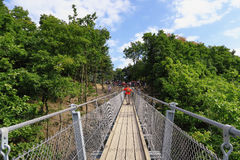 Prosty zawieszenie most Geierlay w Moersdorf przy Hunsrueck moun zdjęcie royalty free
