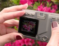 Prosumer digital camera. Girl hands using a prosumer digital camera-flowers background and display image with general informations on the screen stock images
