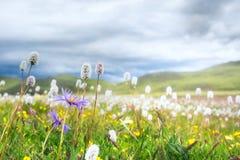 Protégez l'émissaire de fleur image libre de droits